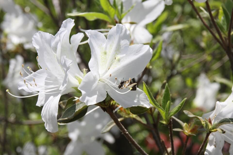 How to Get Rid of Ants in Garden Without Killing Plants