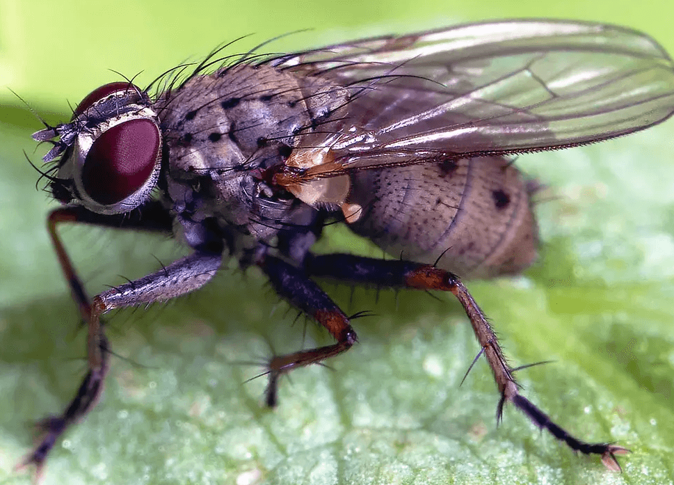 How to Get Rid of House Flies With Vinegar?